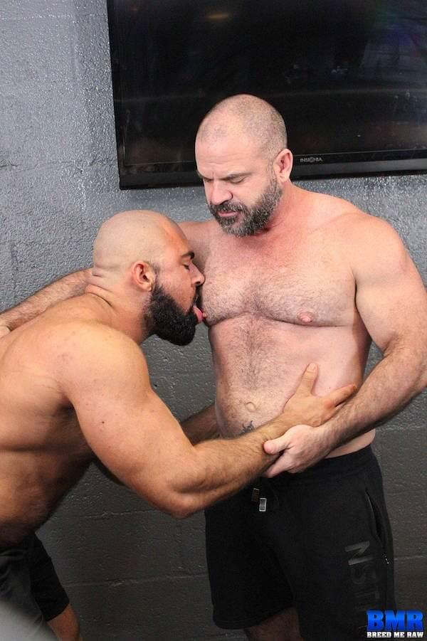 bear lèche seins